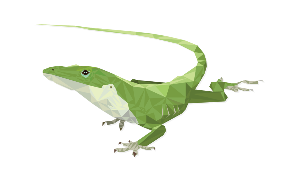 Phillips buying shows kyle. Lizard clipart anole