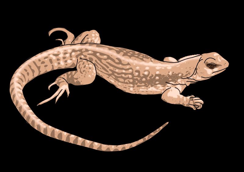 Lizard black and white. Snake clipart bitmap