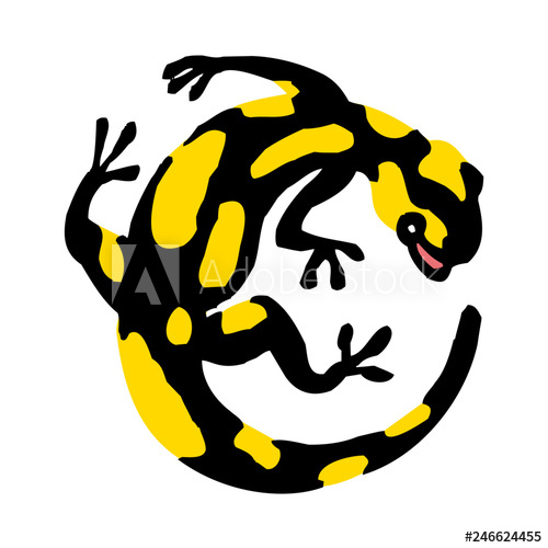 Lizard clipart yellow spot. Salamander with black and
