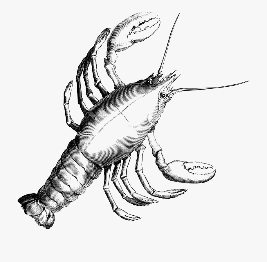 Constellation free . Lobster clipart cancer