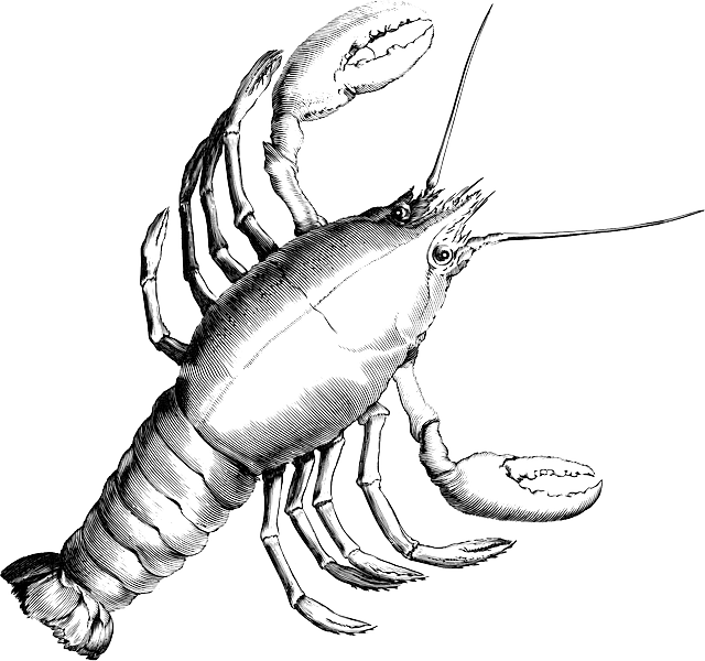 Lobster clipart cooked. Free image on pixabay