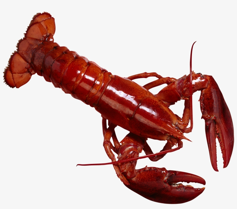 Lobster clipart dancing shrimp. Lobsters in the philippines