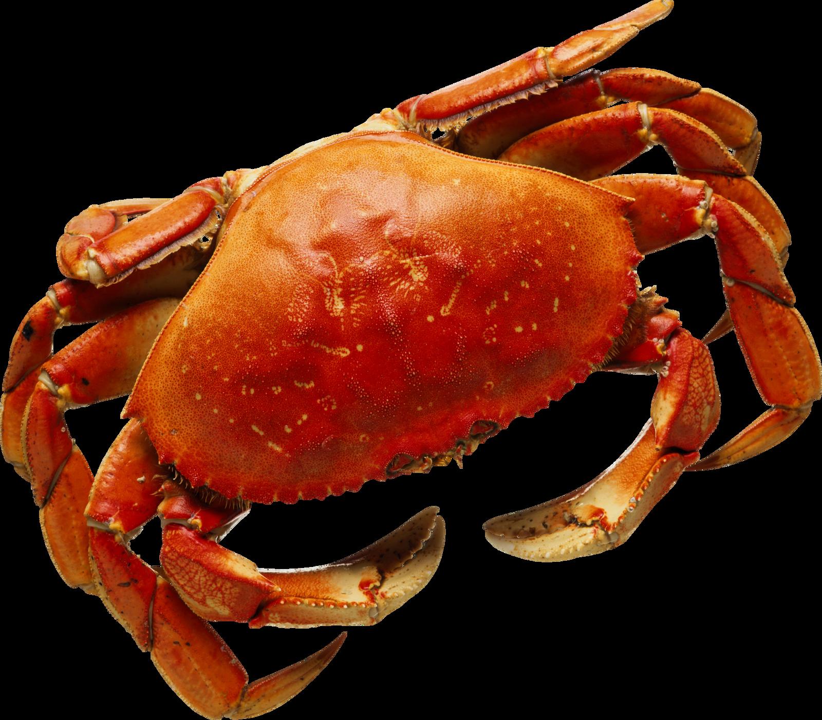 Seafood clipart king crab. Download clip art transprent