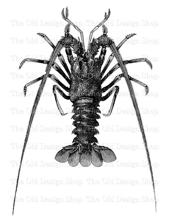 Clip art printable sea. Lobster clipart vintage