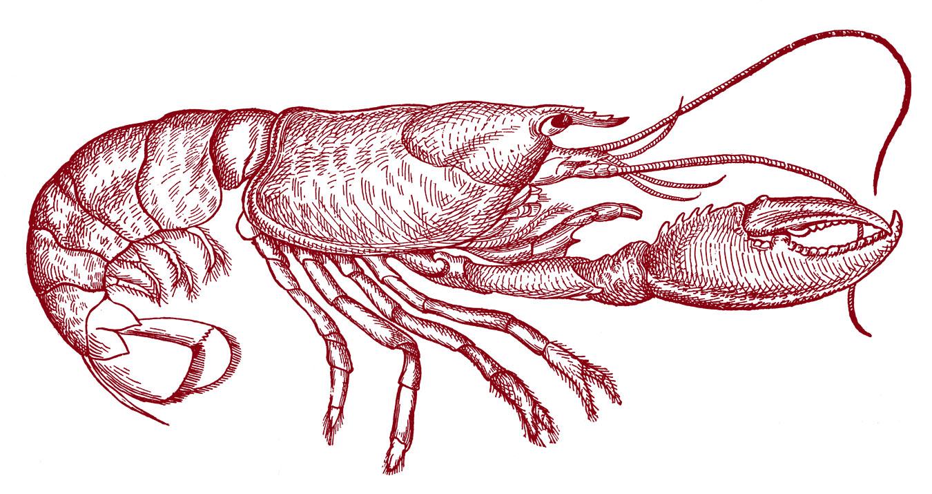Lobster clipart vintage. Clip art diagram the