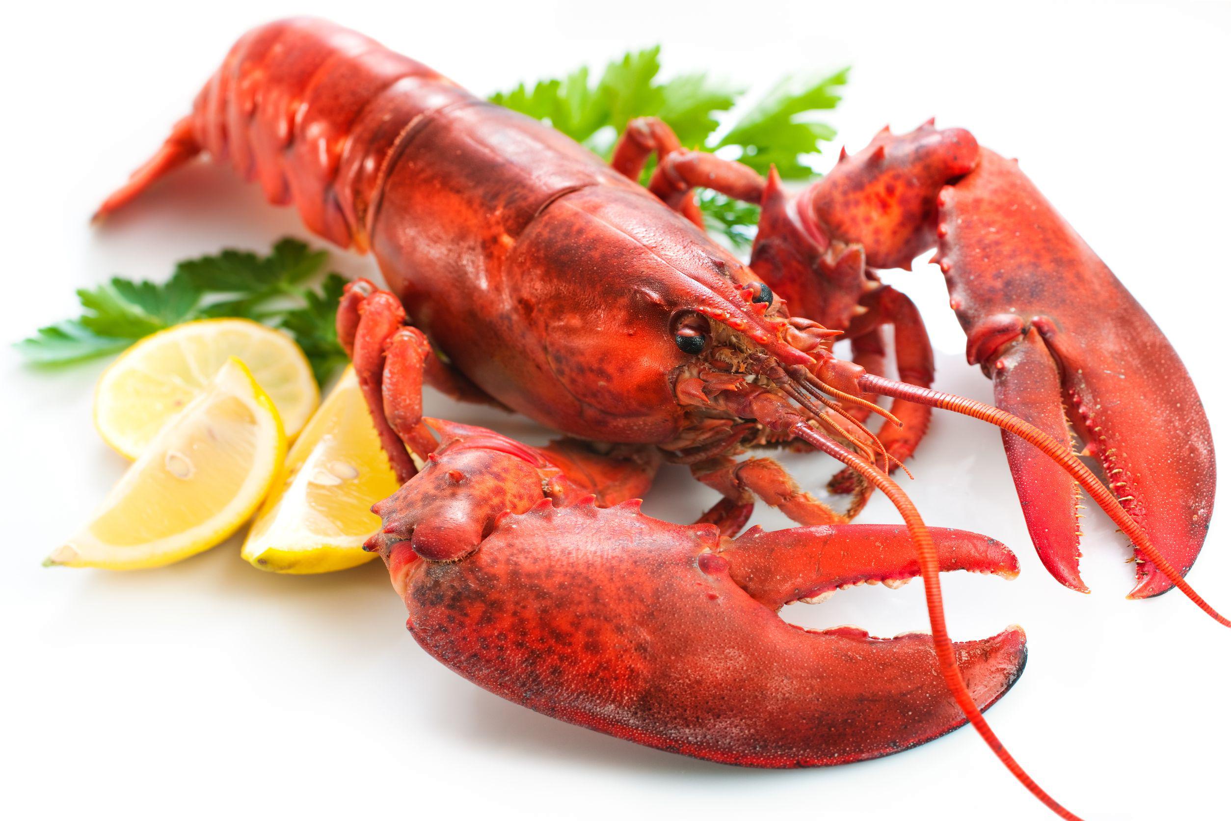 Lobster clipart watercolor. Transparent png peoplepng com