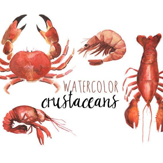 Lobster clipart watercolor. Crustacean clip art nautical