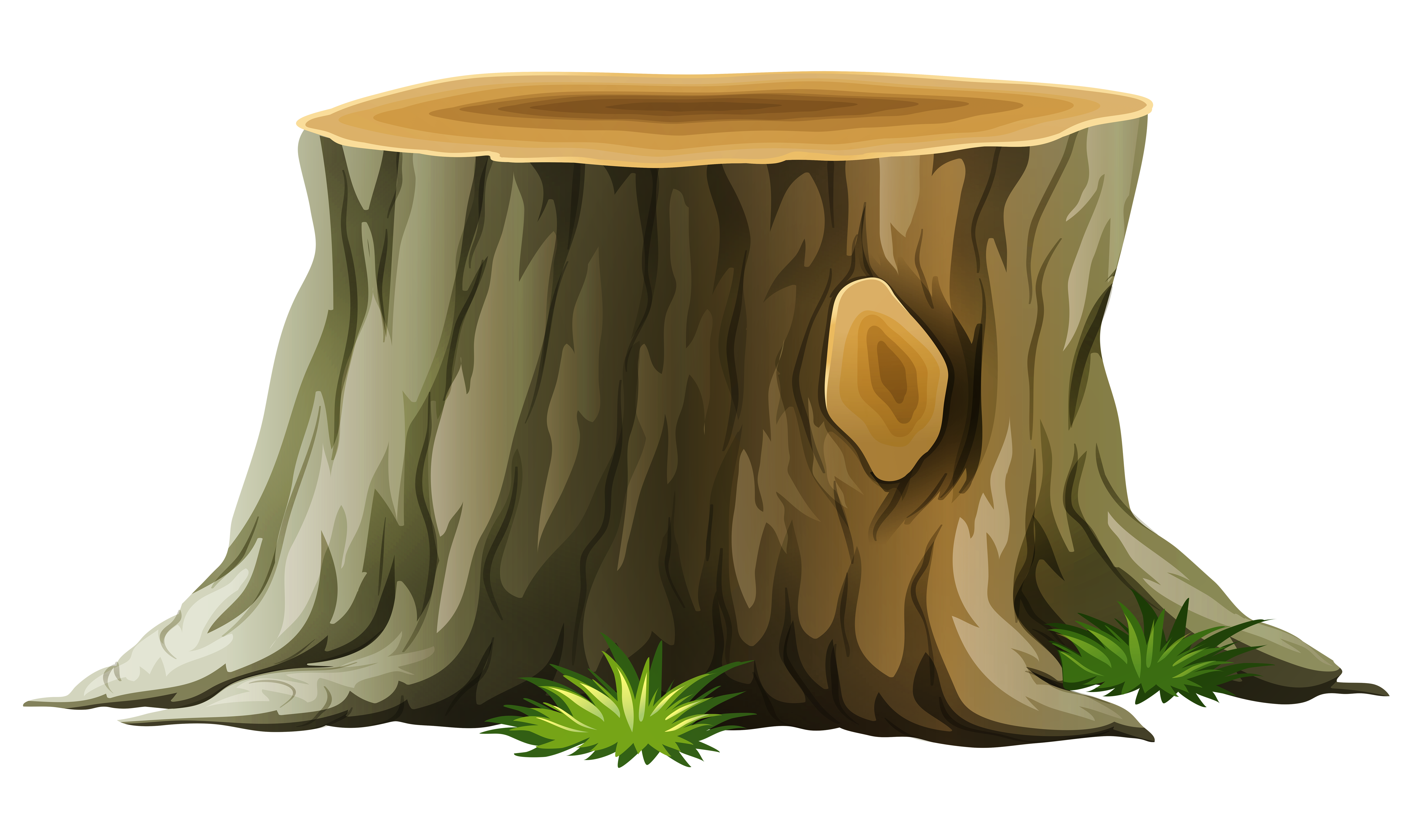 collection of tree. Roots clipart stump grinding
