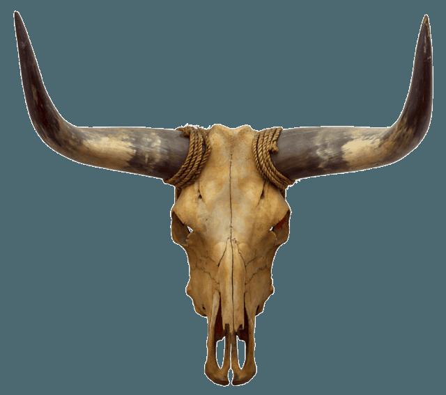 Longhorn clipart animal skull. Virginia cuisine home seven