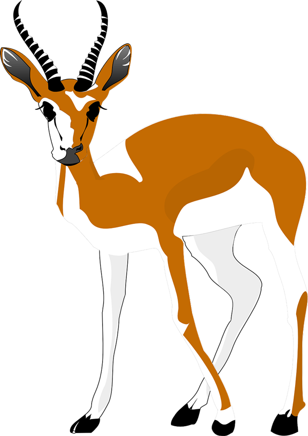 Springbok funny free collection. Longhorn clipart animated