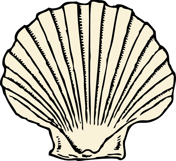 Longhorn clipart background. Beach shell cliparts all