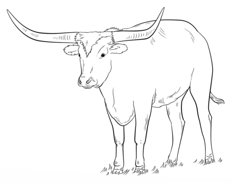Longhorn clipart color. Texas coloring page free