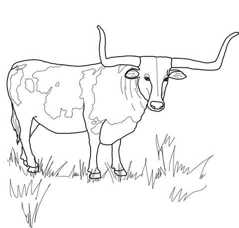 Texas steer free printable. Longhorn clipart coloring page