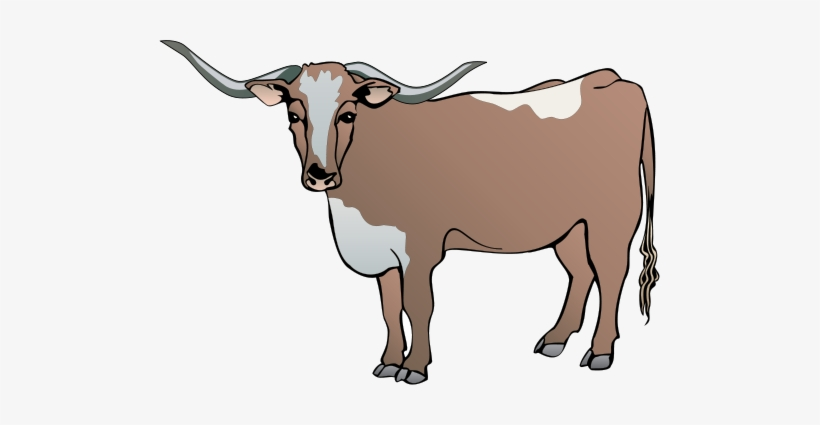 longhorn clipart male cow