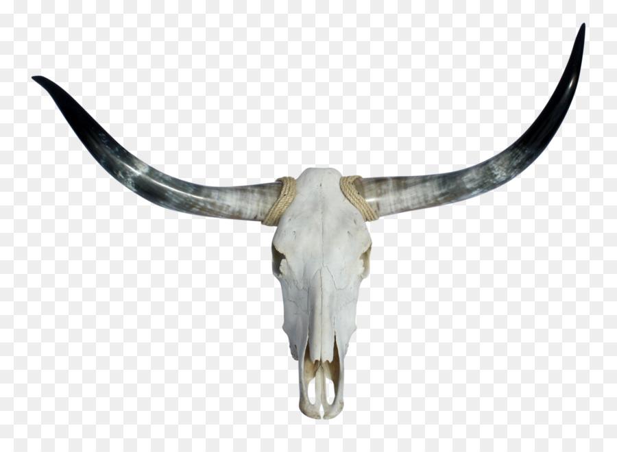 Skull png download free. Longhorn clipart transparent