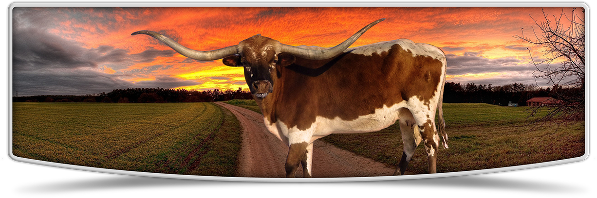 Contact lutt longhorns in. Ox clipart longhorn