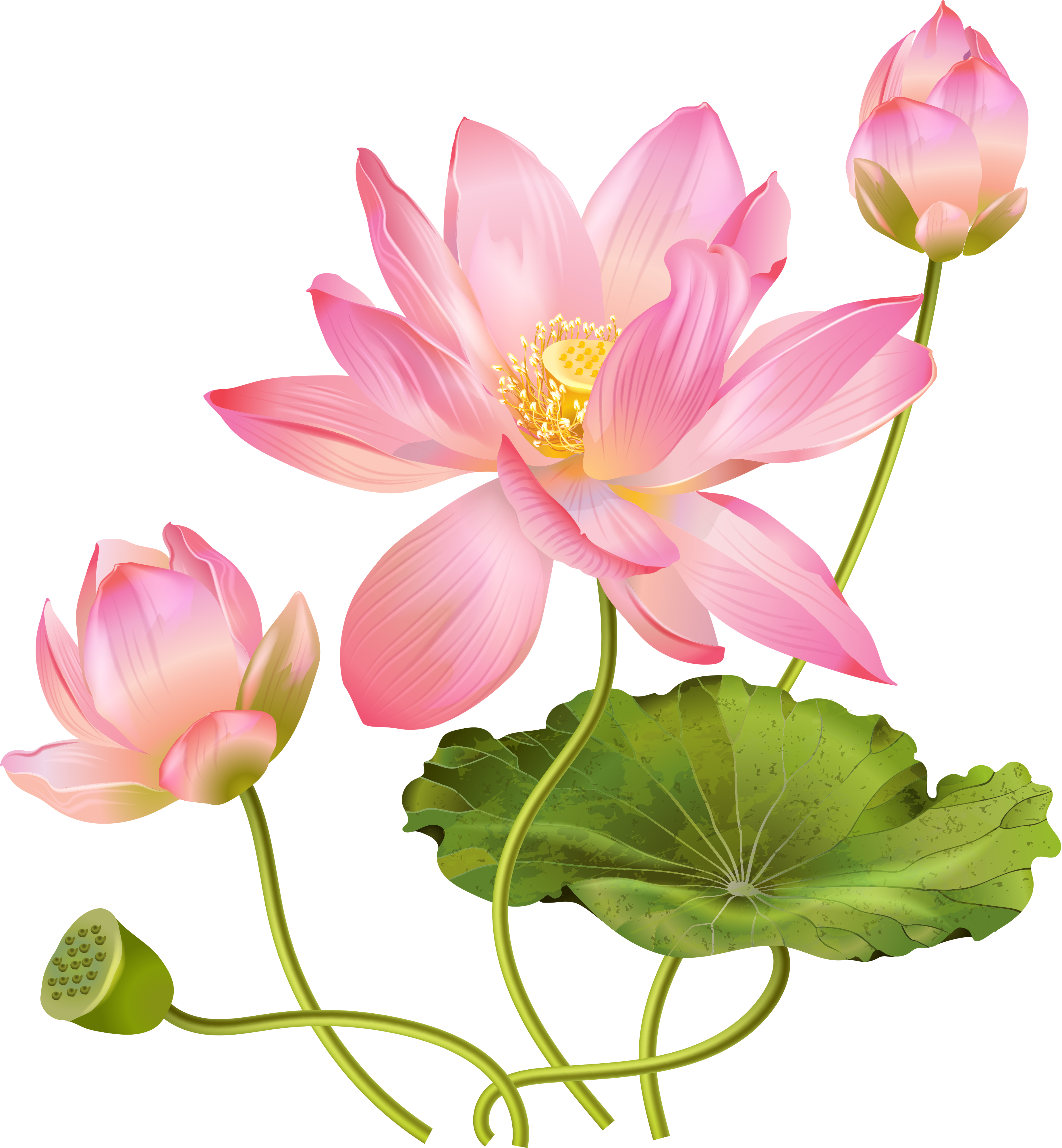 abb a c. Lotus clipart chakra
