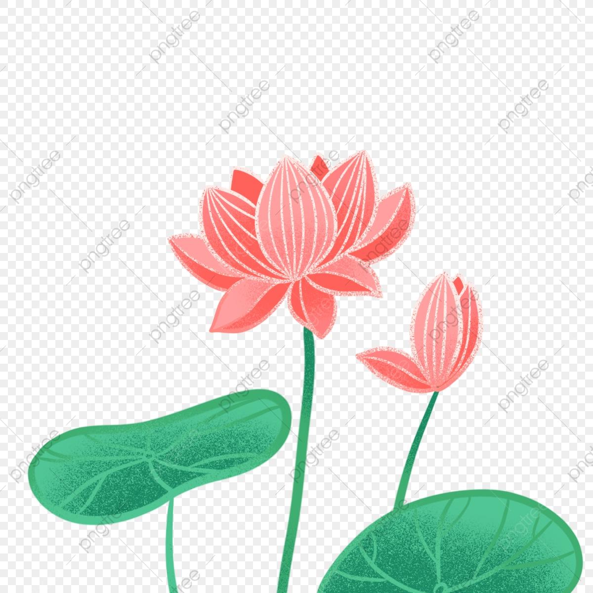Hand drawn png . Lotus clipart cute