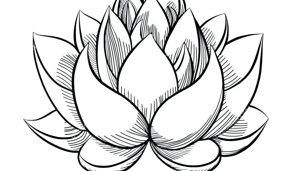 Lotus clipart easy draw, Lotus easy draw Transparent FREE ...