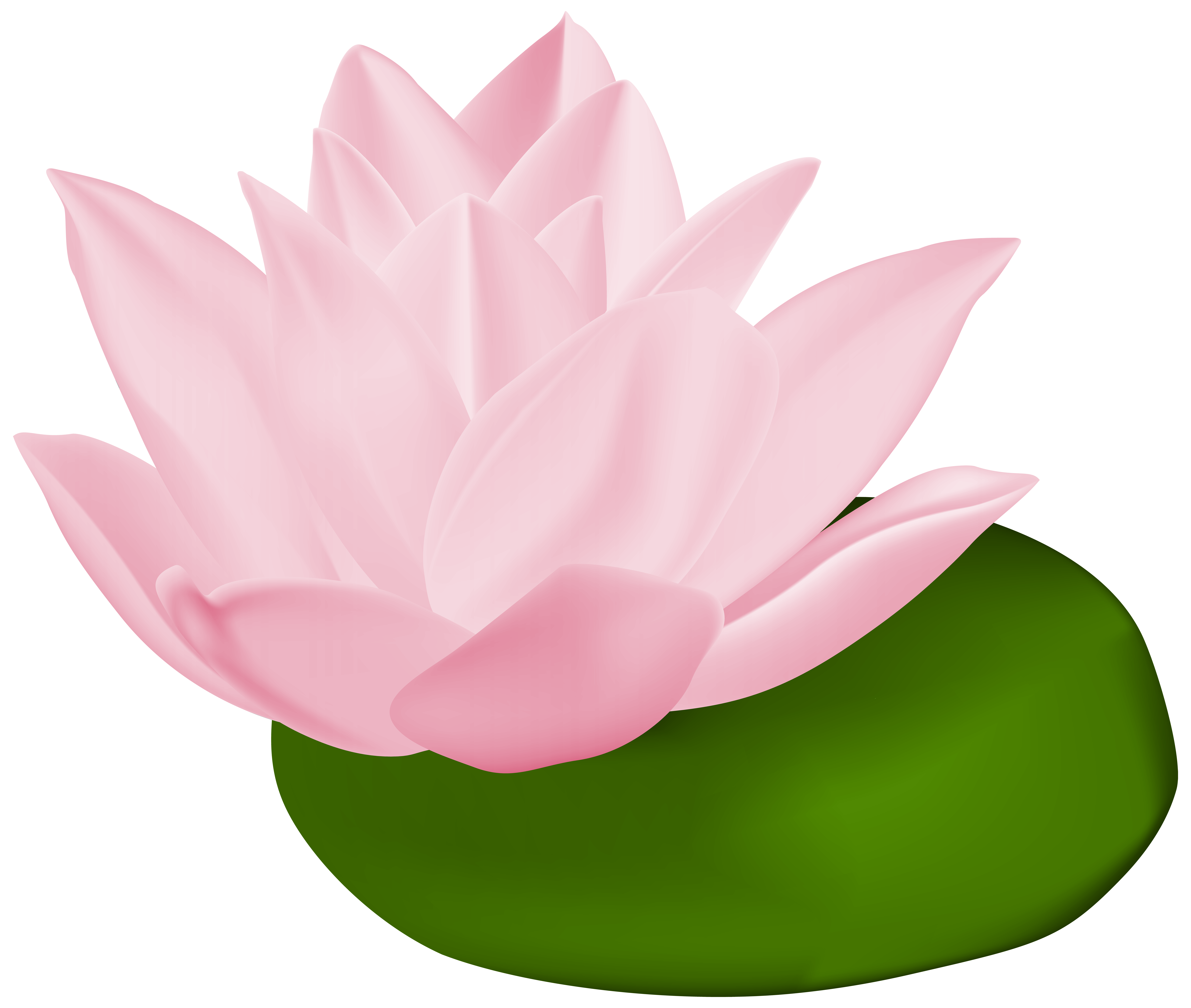 Pink lily transparent png. Water clipart spiral
