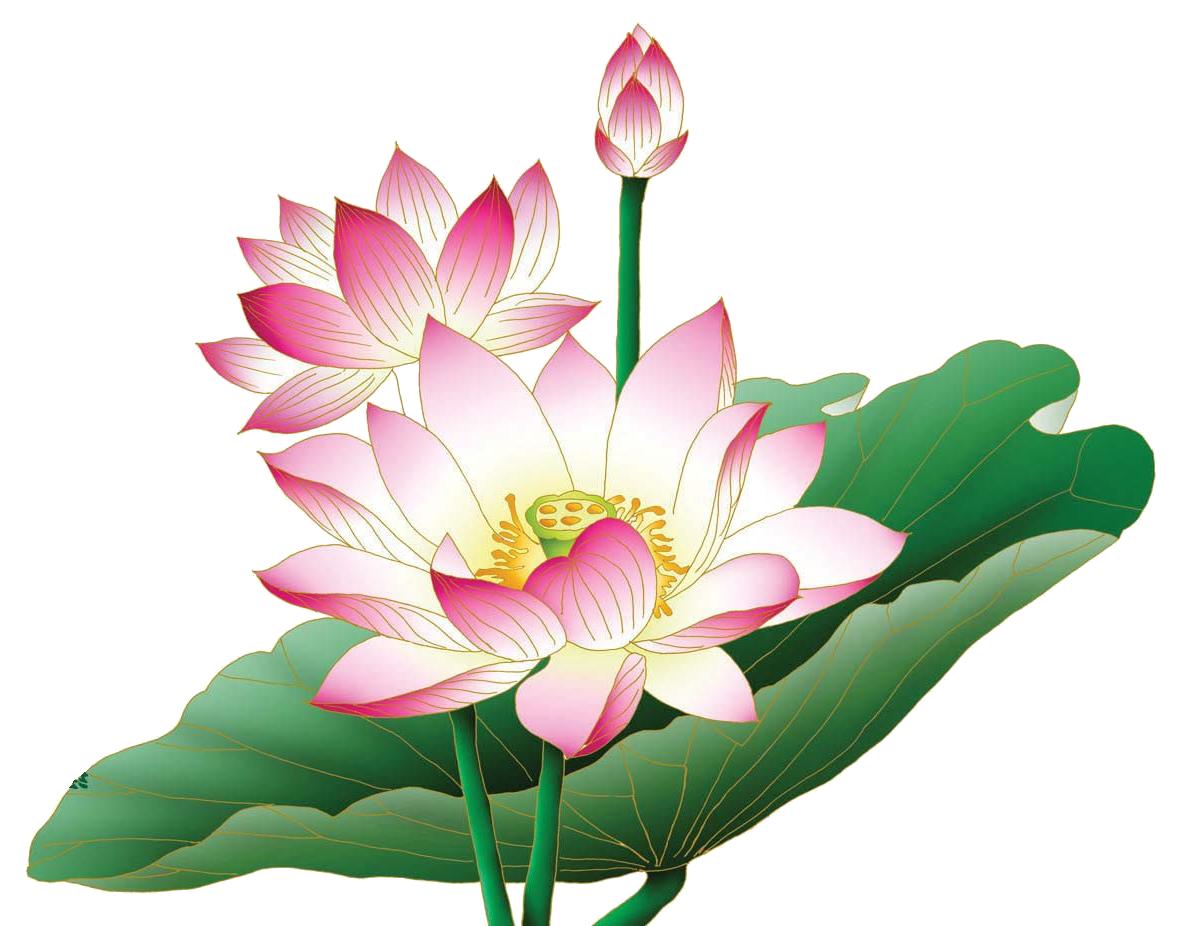 Hd transparent images pluspng. Lotus flower png