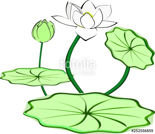 Lotus clipart leave drawing. Flowers blooming and buds
