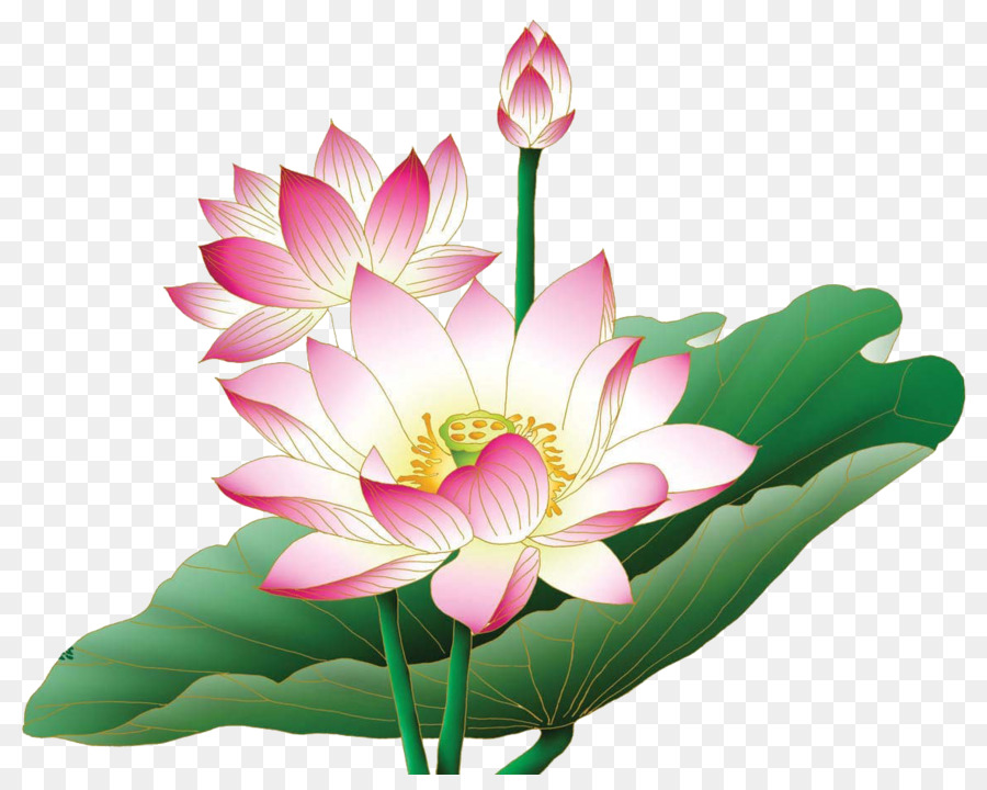 Lotus clipart lotus plant. Flowers background flower