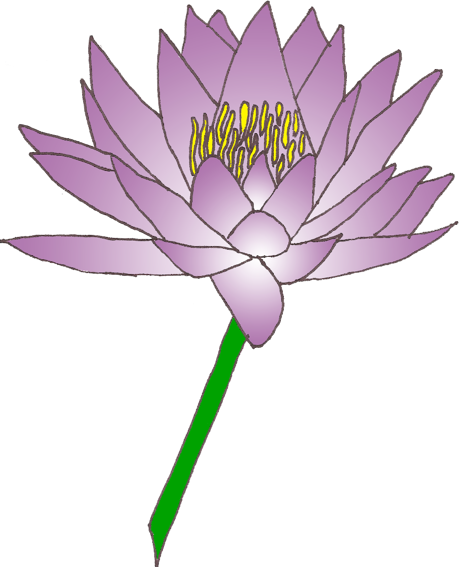 Water lily images free. Lotus clipart shapla