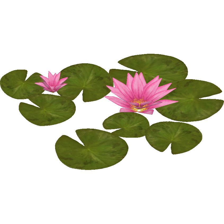 Lotus clipart waterlily. Image water lily zeta