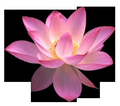 Images free download blue. Lotus flower png