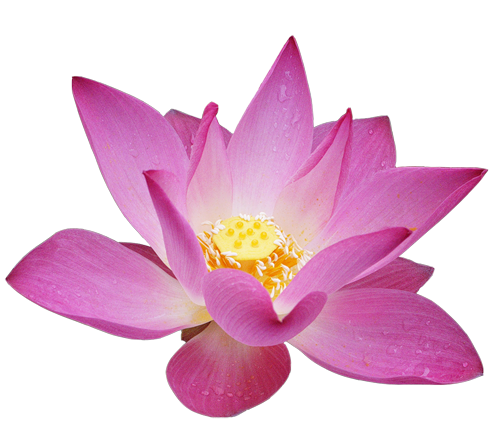 Clipart gallery yopriceville high. Lotus flower png
