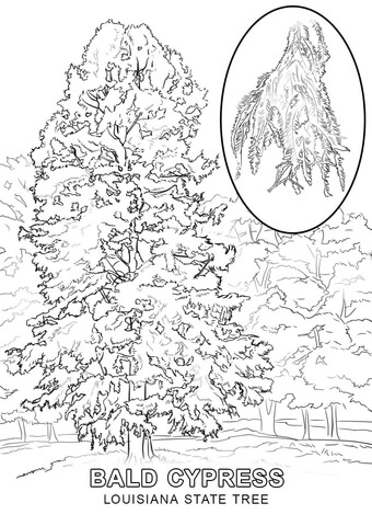 State tree free printable. Louisiana clipart coloring page
