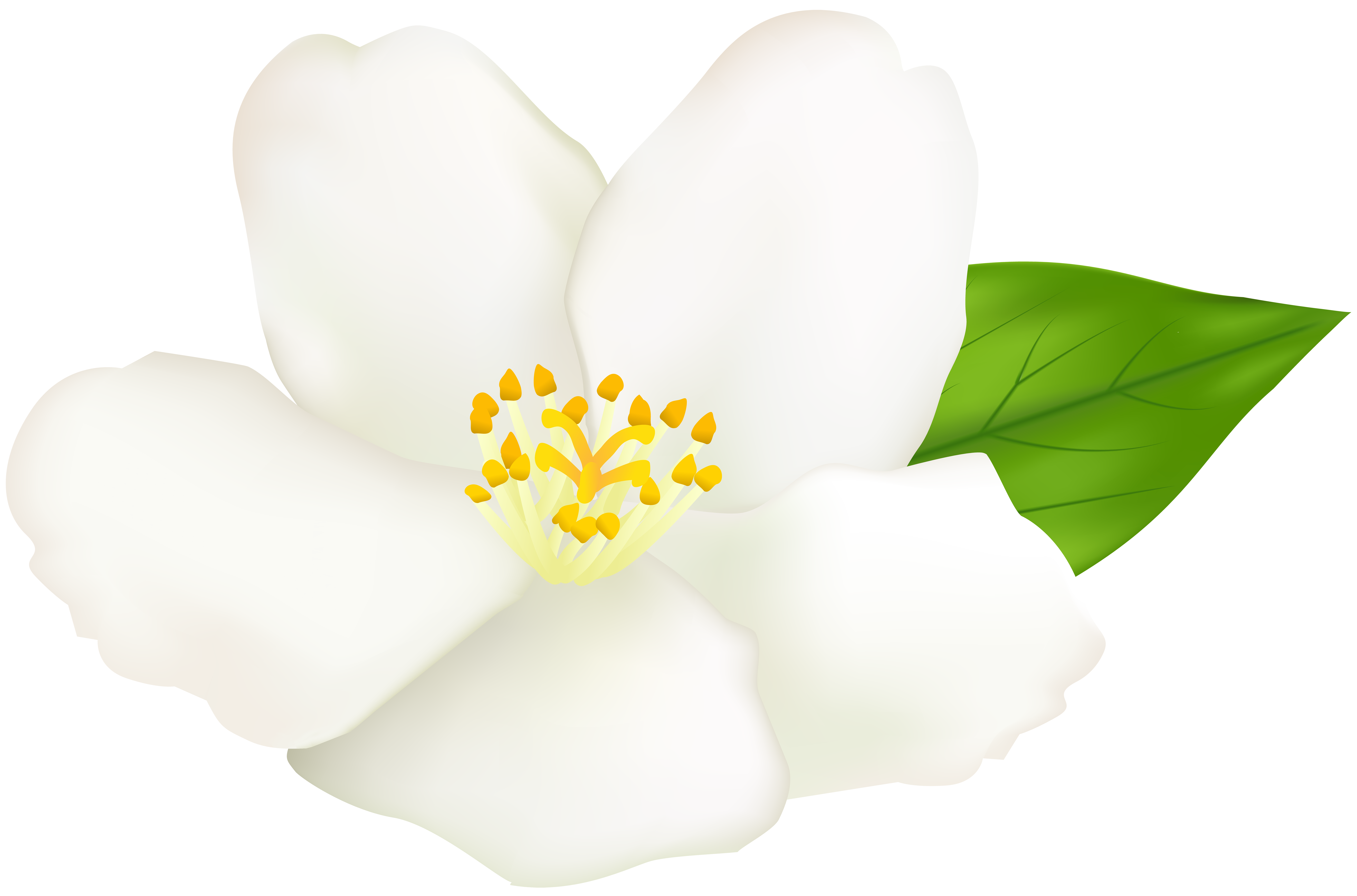 Flower at getdrawings com. Louisiana clipart magnolia