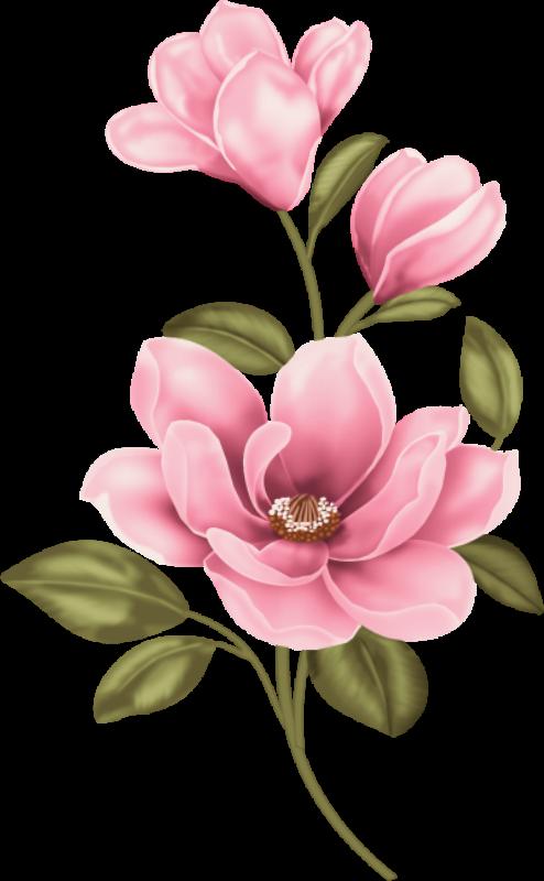huge freebie download. Louisiana clipart magnolia