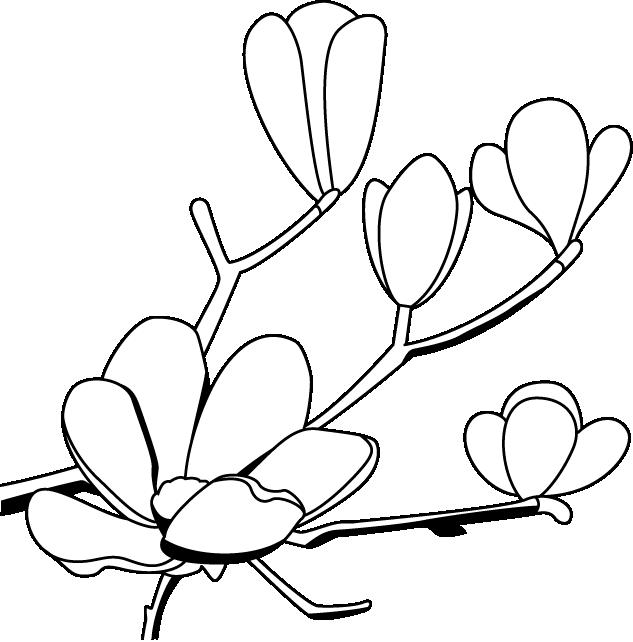 Flower clip art panda. Louisiana clipart magnolia