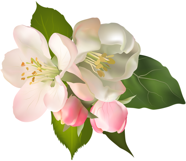 Louisiana clipart magnolia. At getdrawings com free