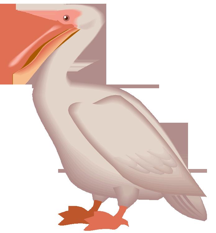louisiana clipart pelican