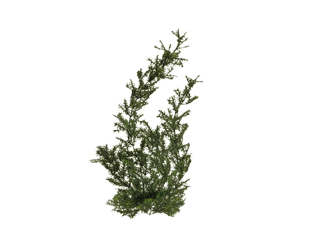 Collection of free cypresses. Louisiana clipart root
