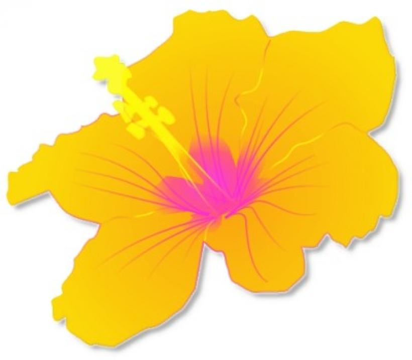 Luau clipart rainforest flower. Flowers free download best