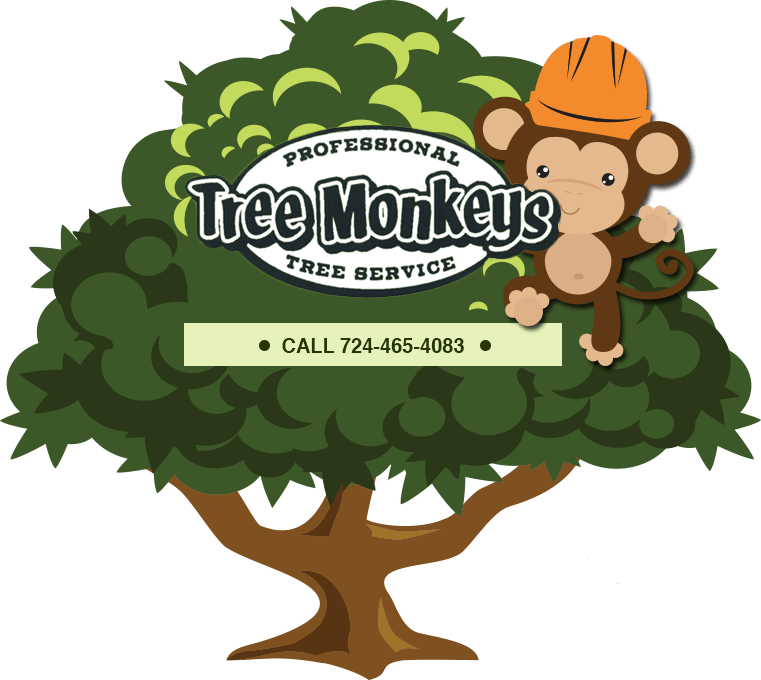 Removal trimming stump grinding. Monkeys clipart tree