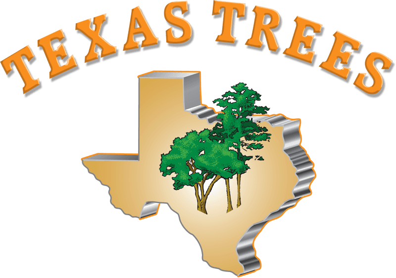 Texas trees tree service. Roots clipart stump grinding