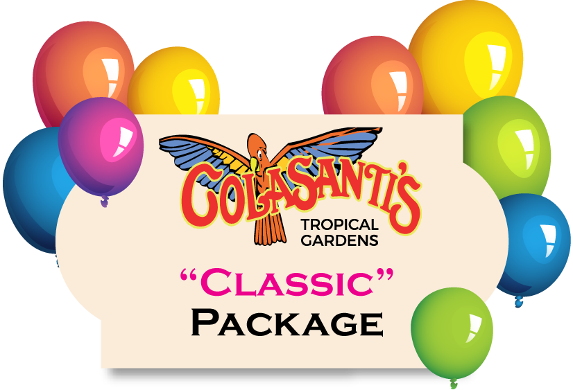 Luncheon clipart birthday. Parties colasanti s tropical