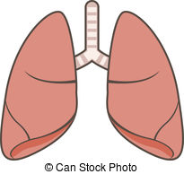 Lung panda free images. Lungs clipart