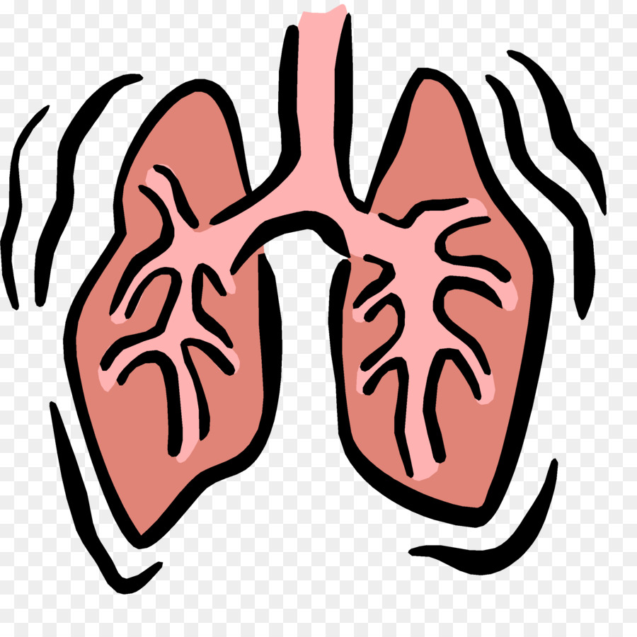 Respiratory system therapist respiration. Lungs clipart
