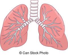 Lung clip art panda. Lungs clipart