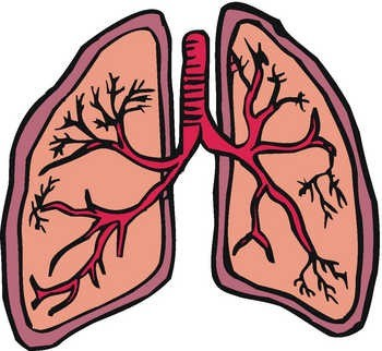 Lungs clipart. Lung panda free images