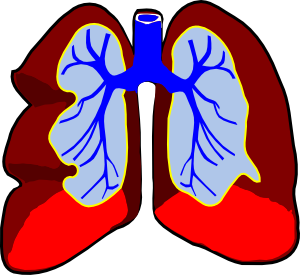 Healthy clip art at. Lungs clipart