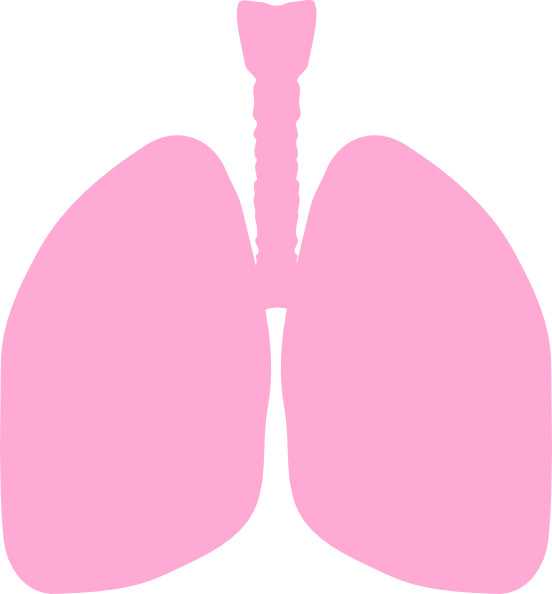 Lungs clip art at. Cigar clipart vector