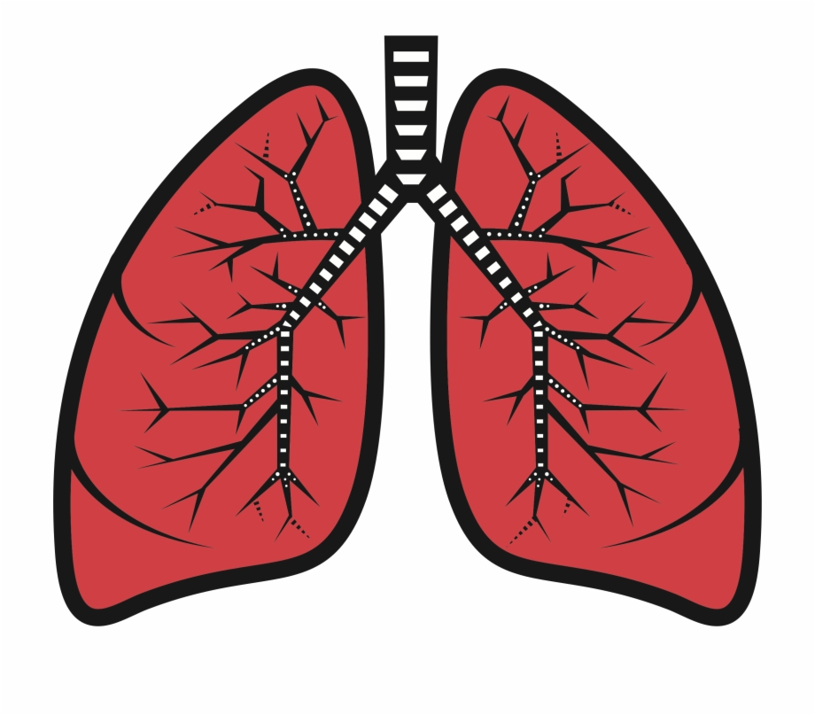 Transparent png download for. Lungs clipart