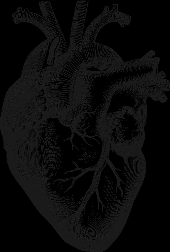 Lungs clipart anatomical heart. Onlinelabels clip art details